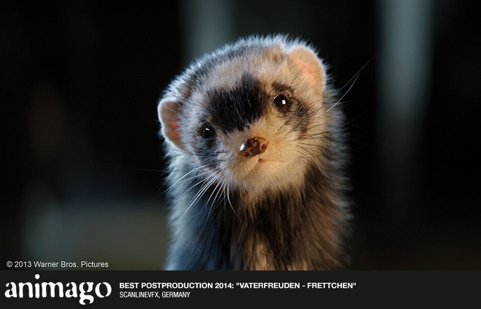 Best-Postproduction-2014-Vaterfreuden-Frettchen-903