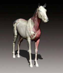 INSIDE OUT – A HORSE WITH NO NAME